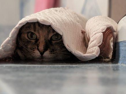cat hiding under bathroom mat
