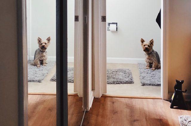 small dog in bathroom